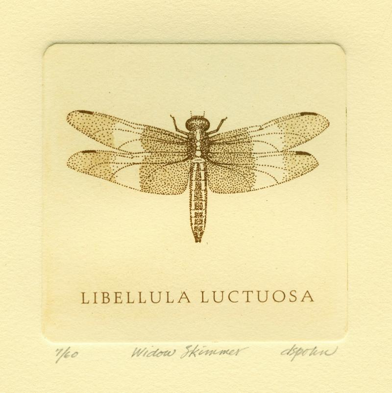 Widow Skimmer, solar plate etching
