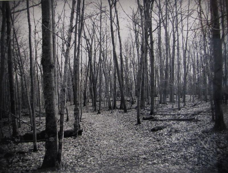 A Walk in the Woods by Kelly Maag
