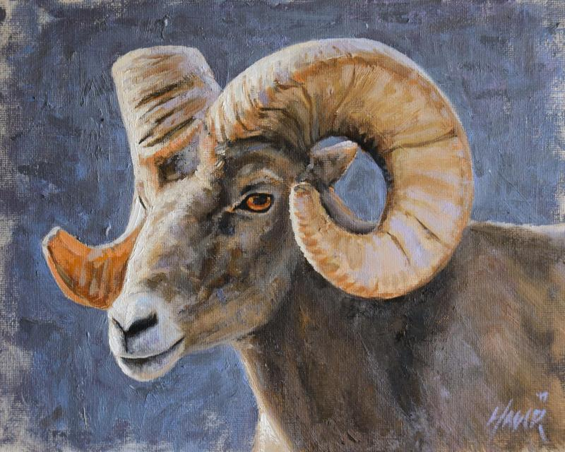 Big Horn Sheep Portrait by Nathan Hager