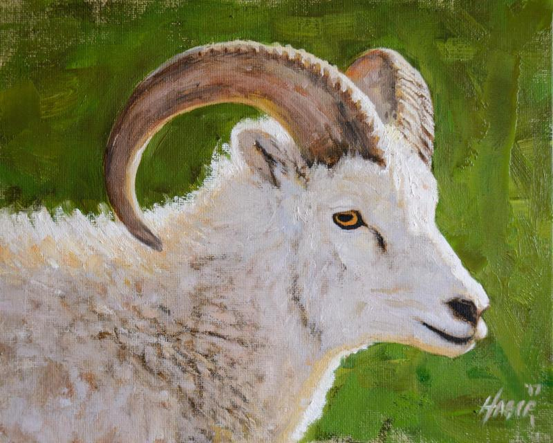Dahl Sheep Portrait by Nathan Hager