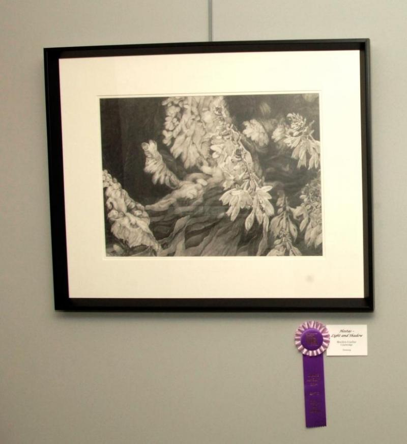 Hostas- Light and Shadow by Marilyn Cuellar. Best in Show at IMAGE 2014