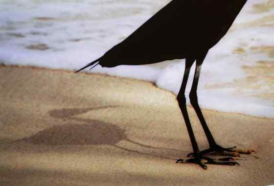 Flatland-Night Heron Explains the Sea to Shadow, a digital photography by Paul Olson of Hinckley, MN